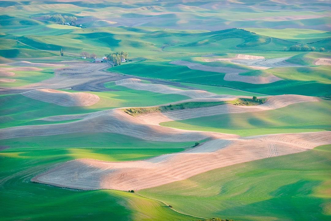 Palouse is an unique place in the Eastern Washington with its rolling hills and a Steptoe Butte standing high in the middle.