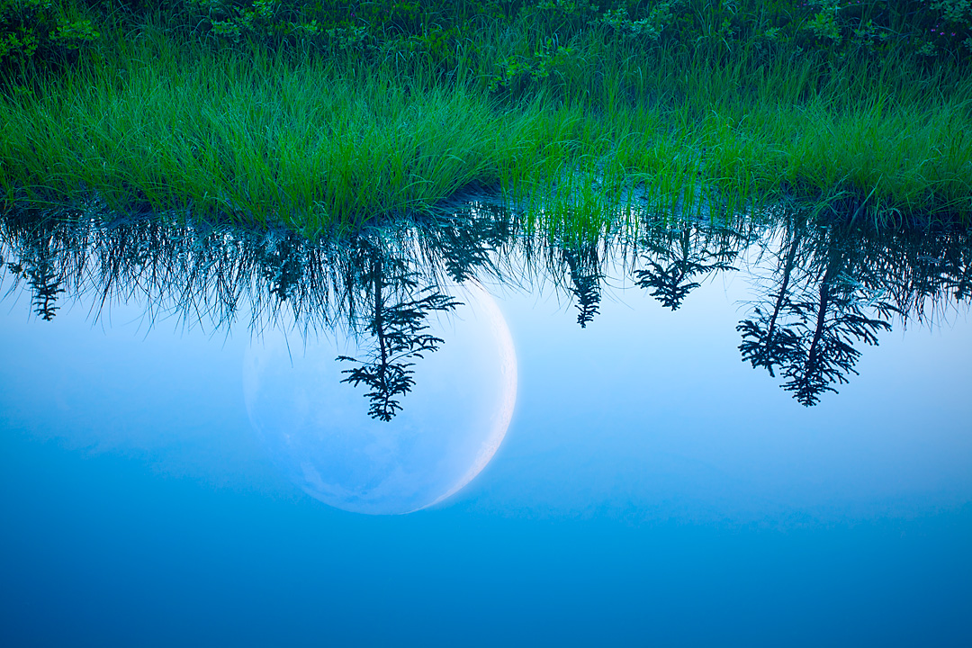 Reflection of Night